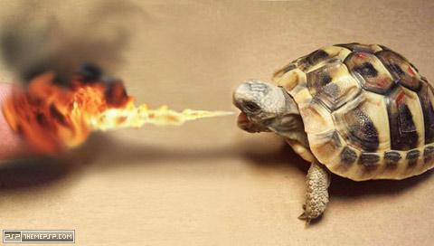 fire breathing turtle, ho!