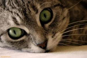Green-Cat-Eyes